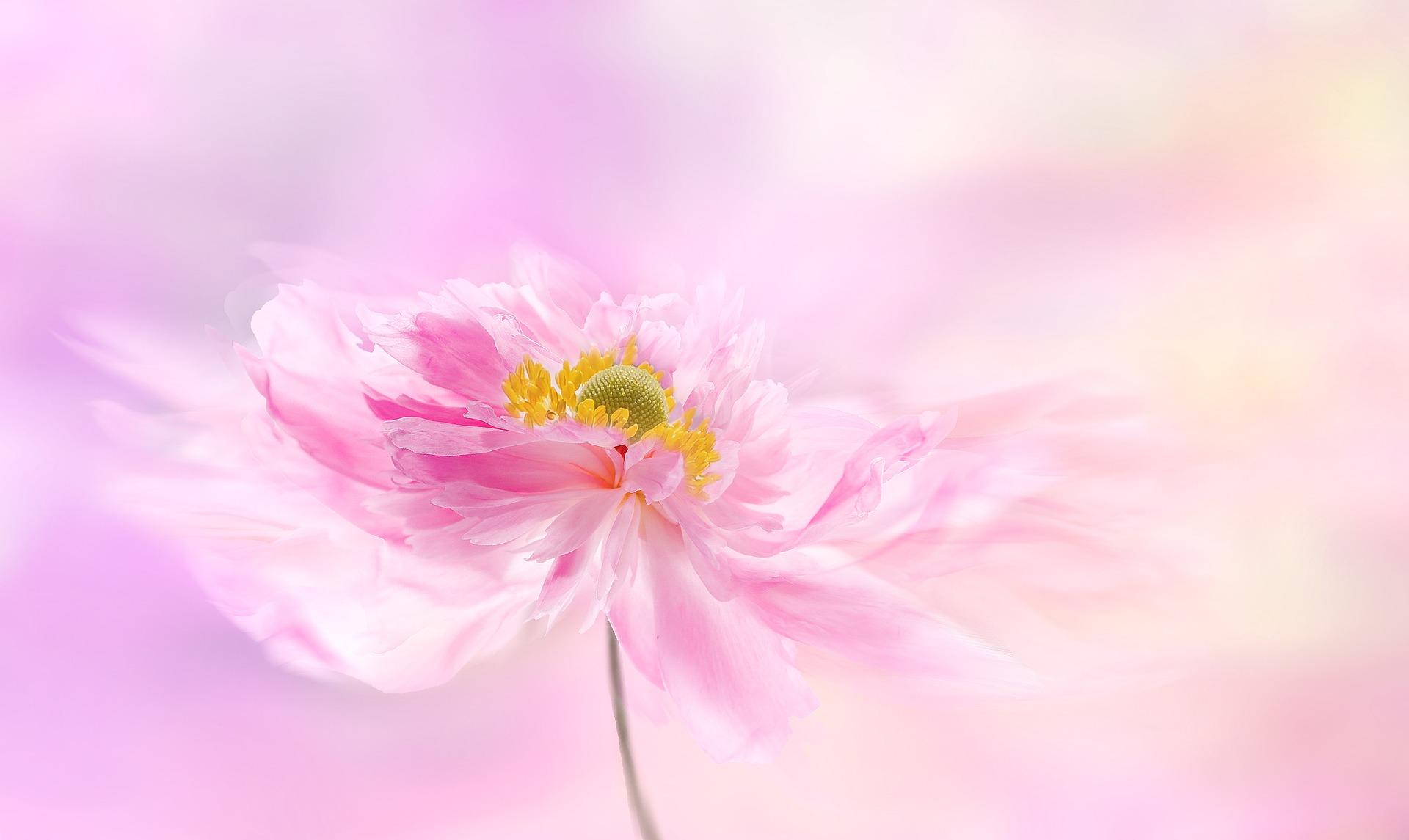 anemone-3527401_1920