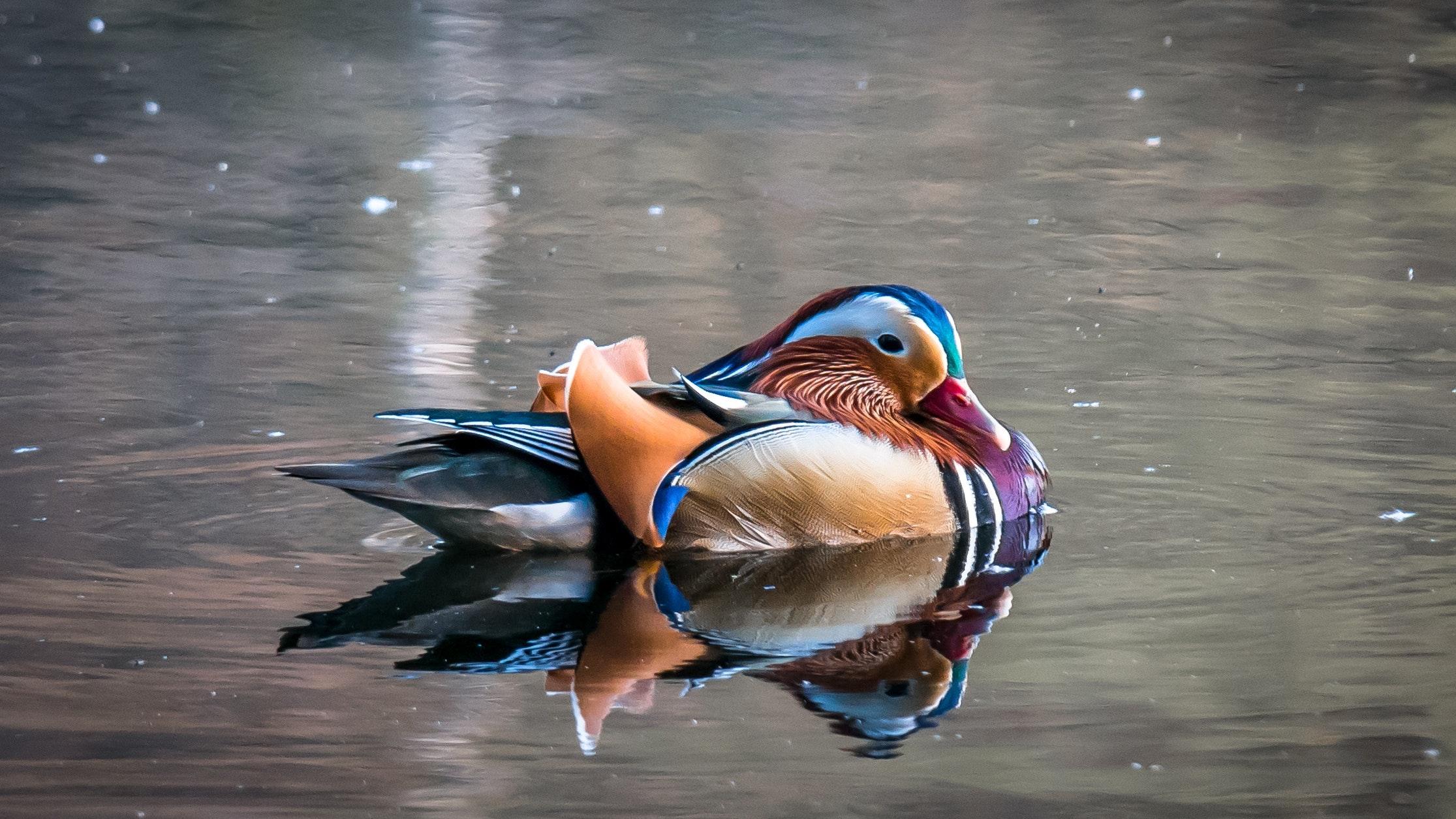 animal-beak-bird-416166