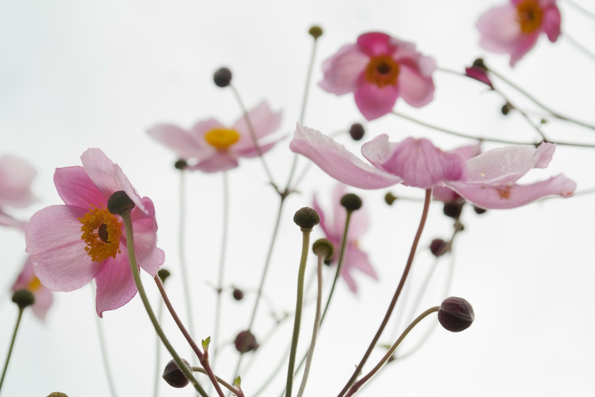 blossom-215565_1920 (1)