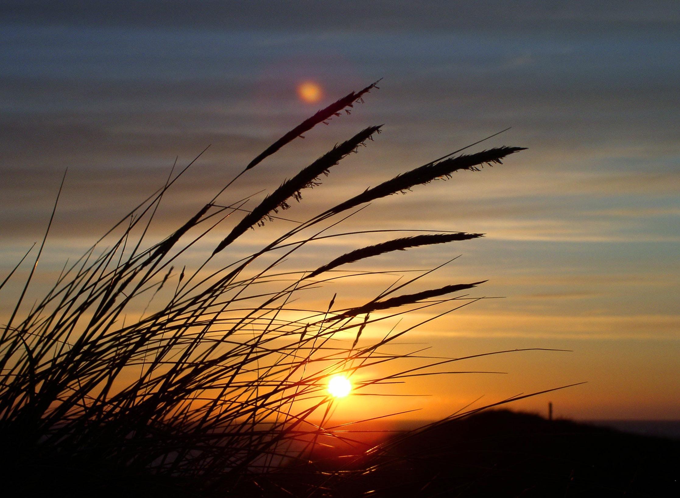 dawn-dusk-grass-86697