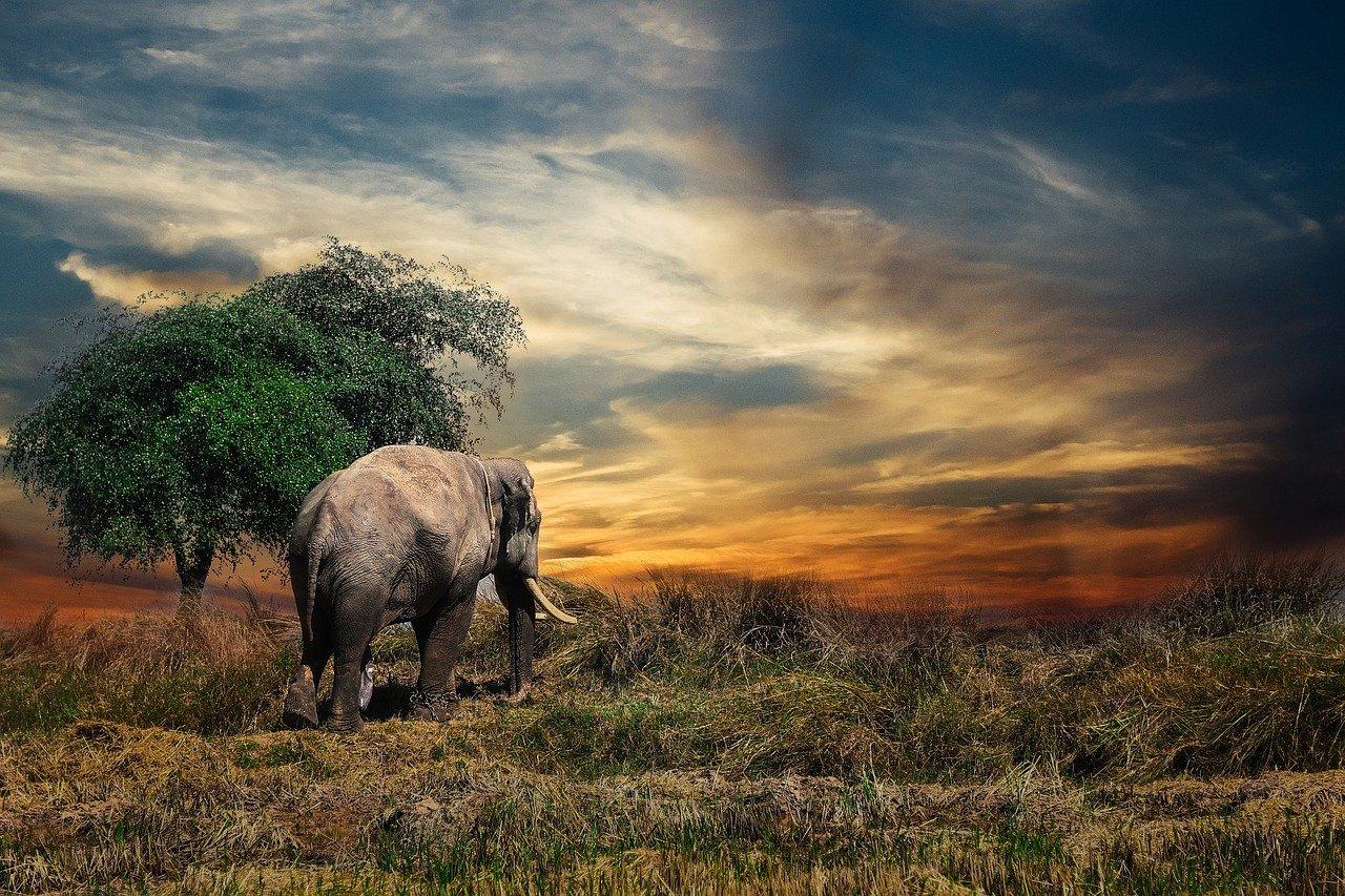 elephant-2729413_1280