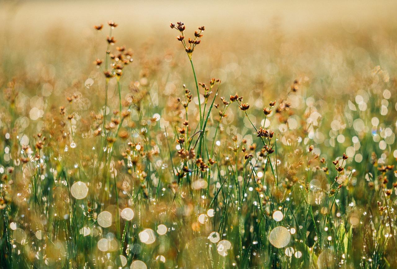 floral-865823_1280
