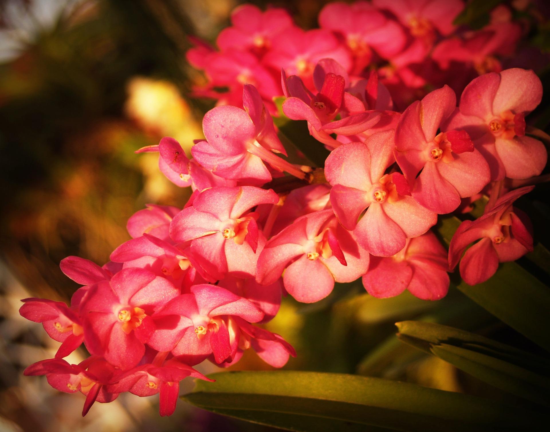 flower-1550887_1920