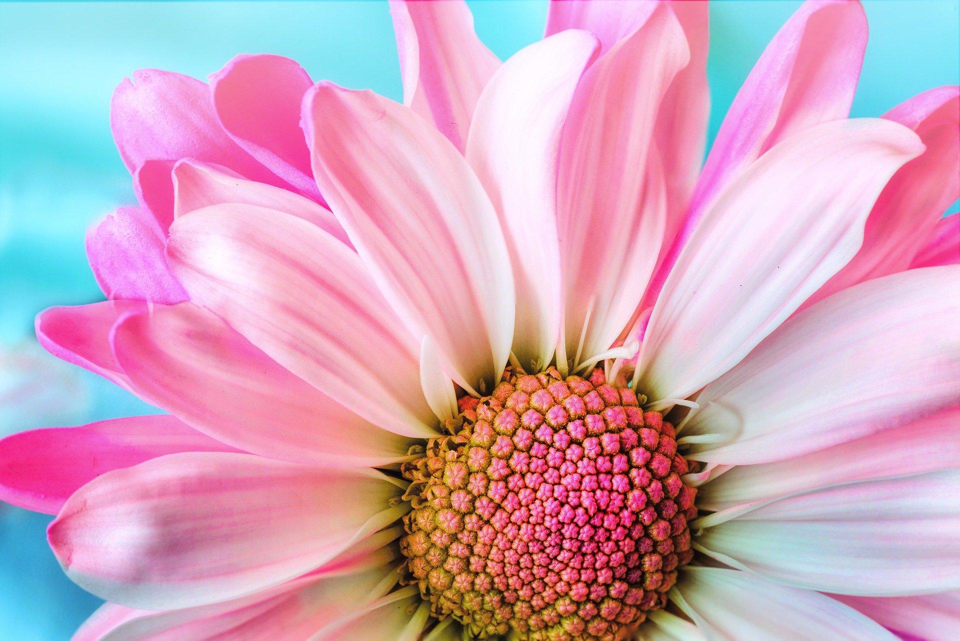 flower-3140492_1920 (1)