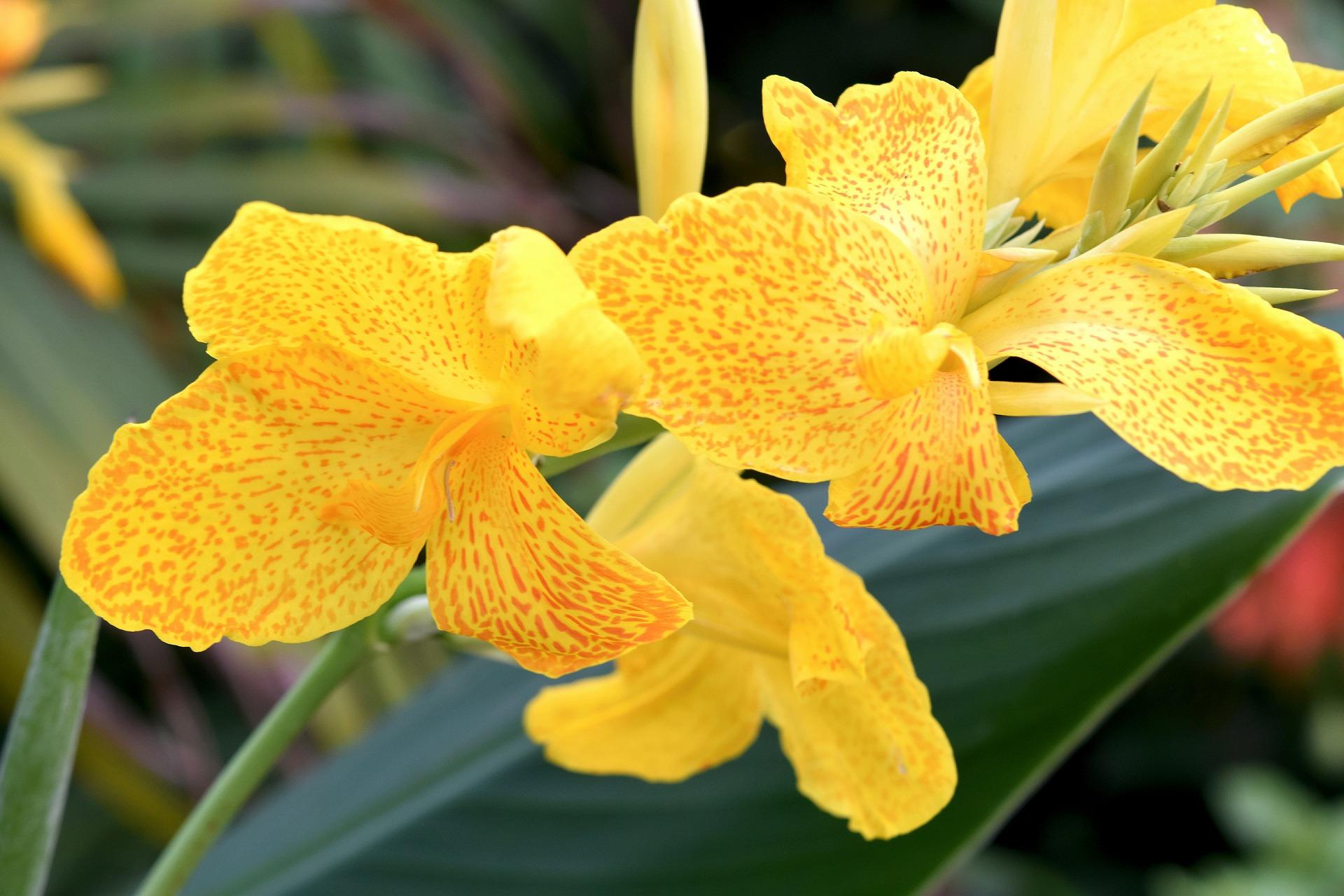 flower-3580563_1920