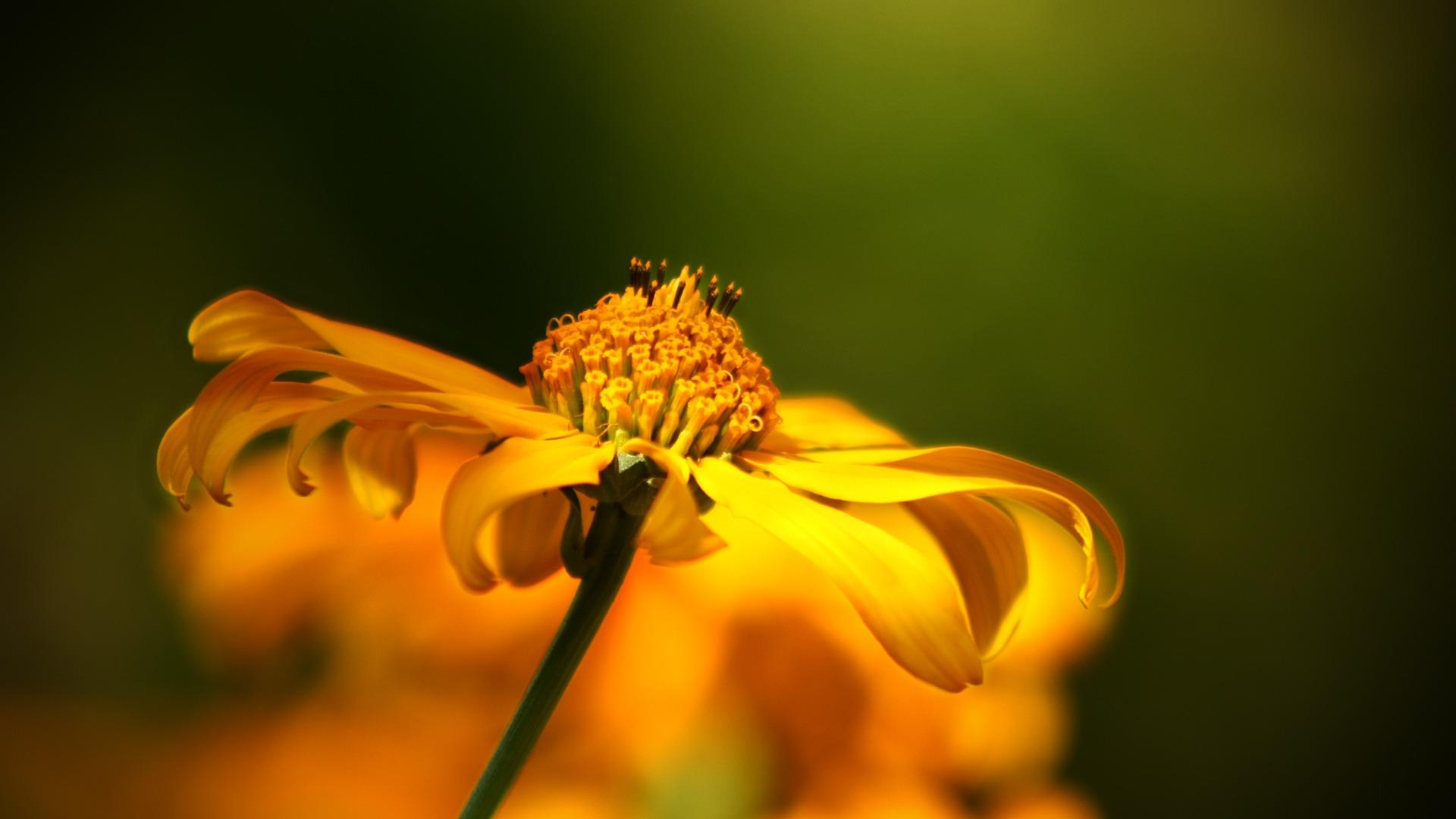 flower-52268