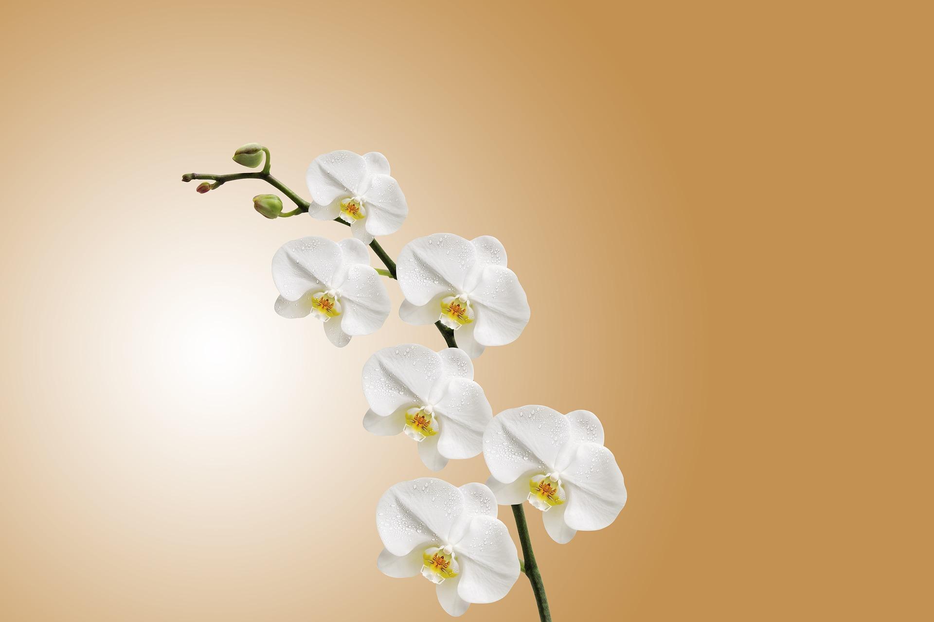 flower-743373_1920