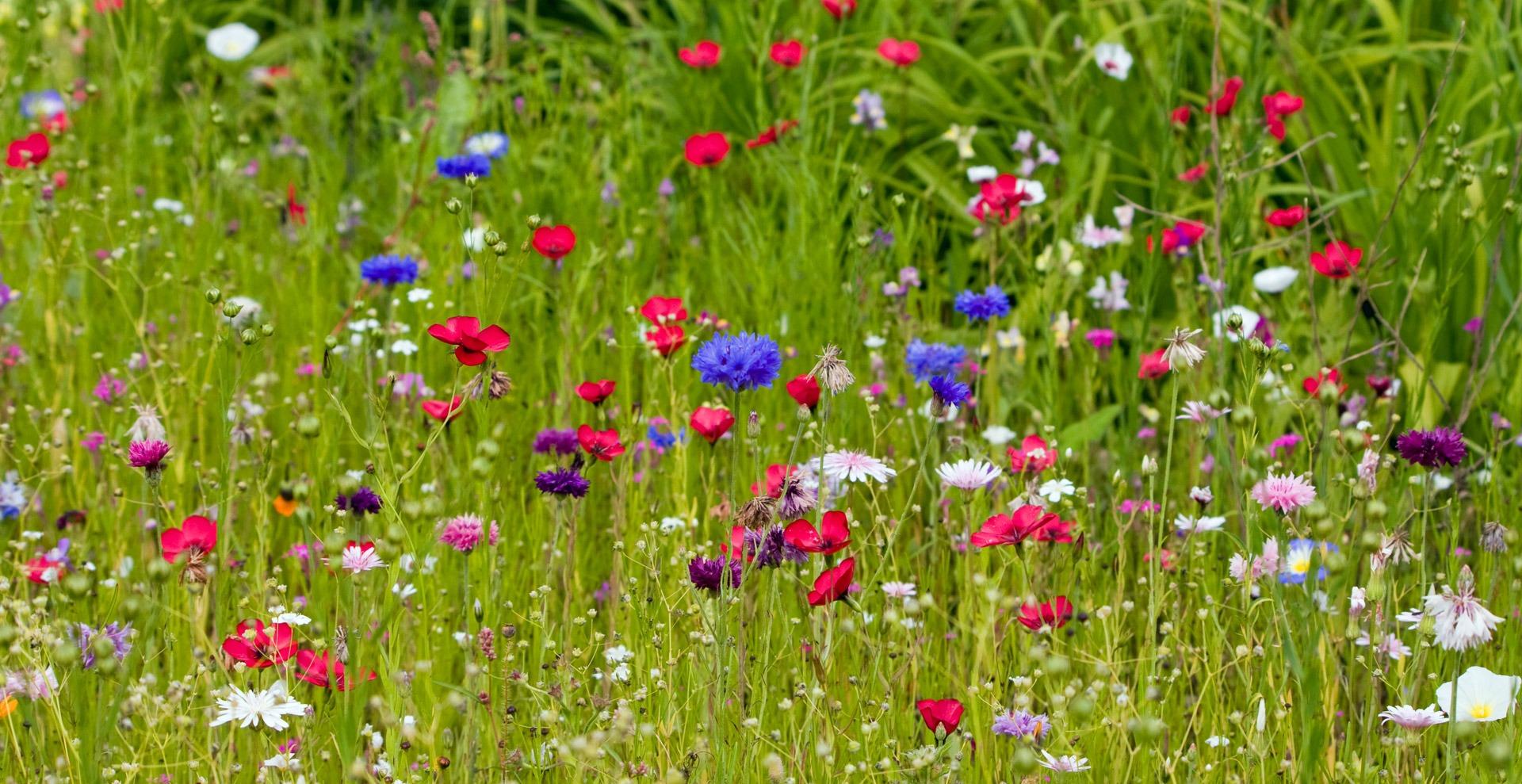 flowers-165193