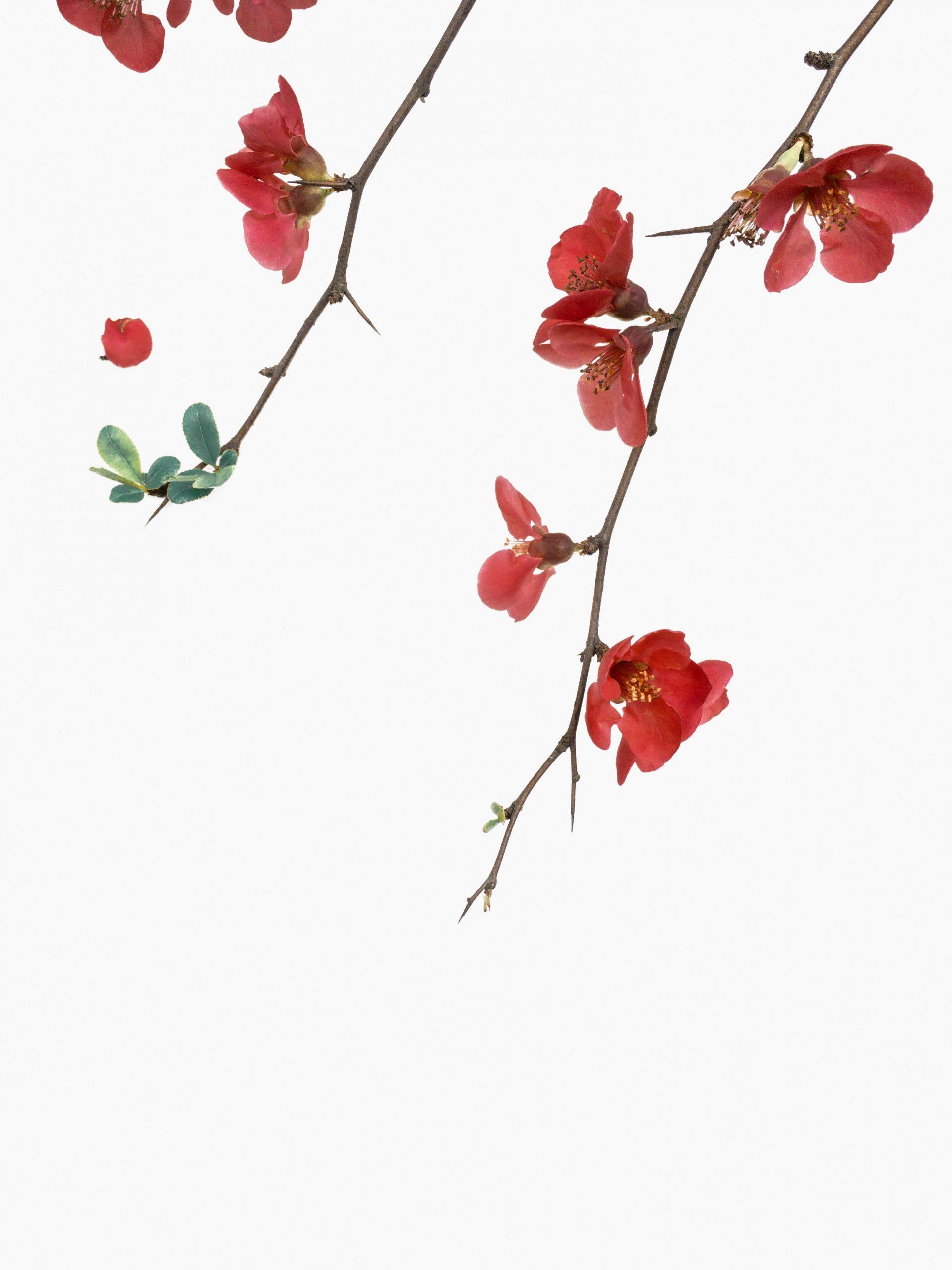 han-chenxu-543979-unsplash