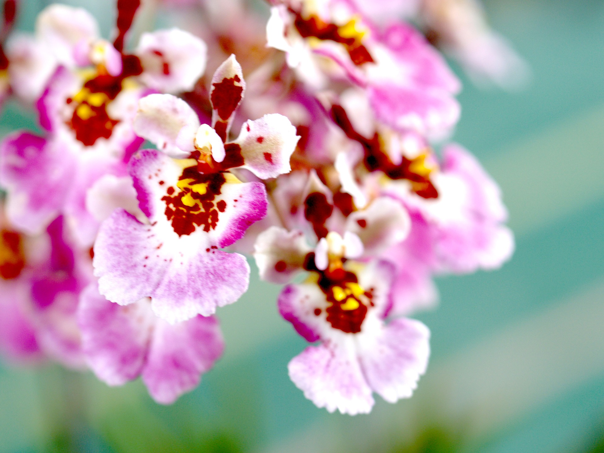 orchid-1553570_1920