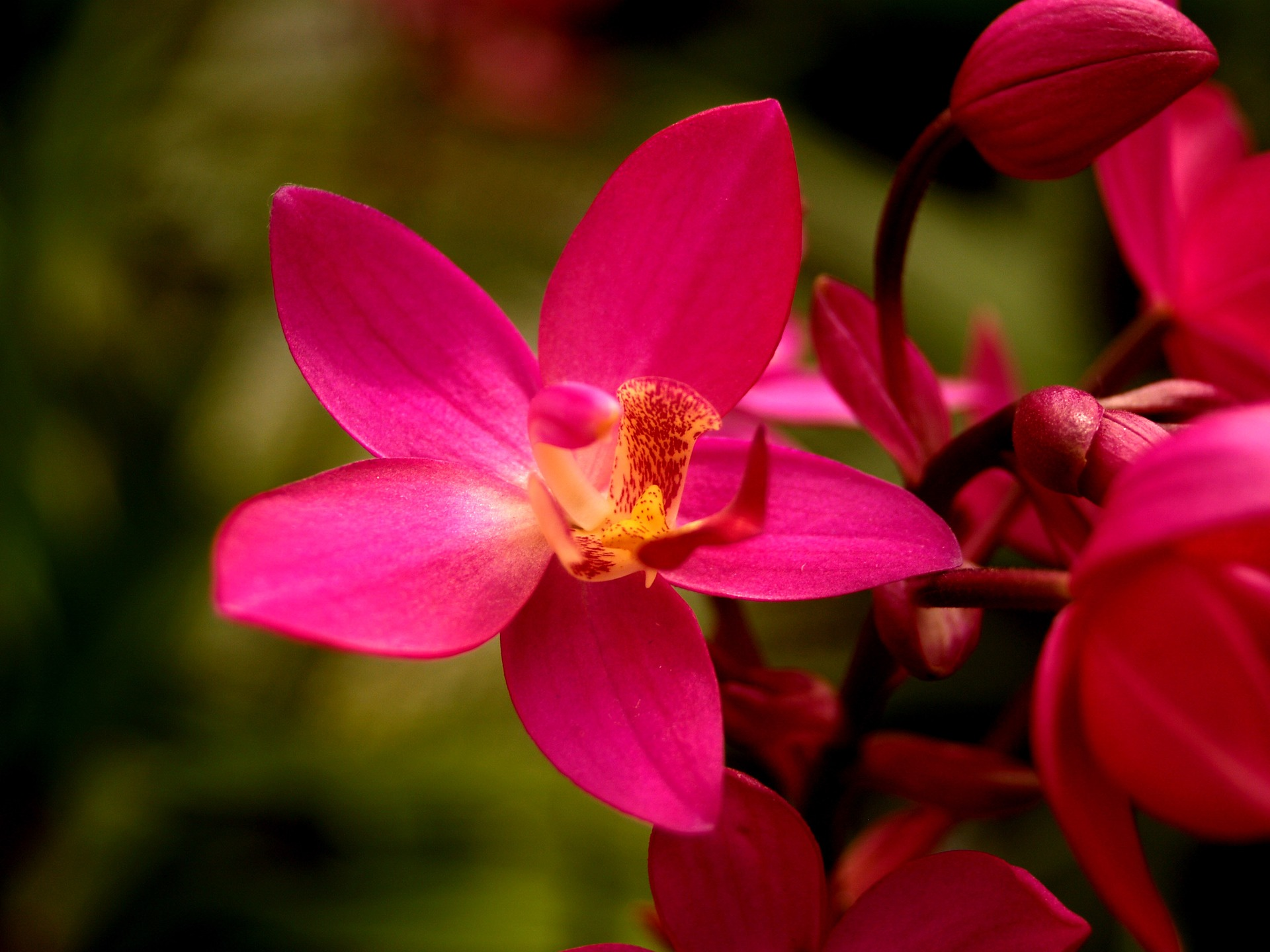 orchid-1553701_1920