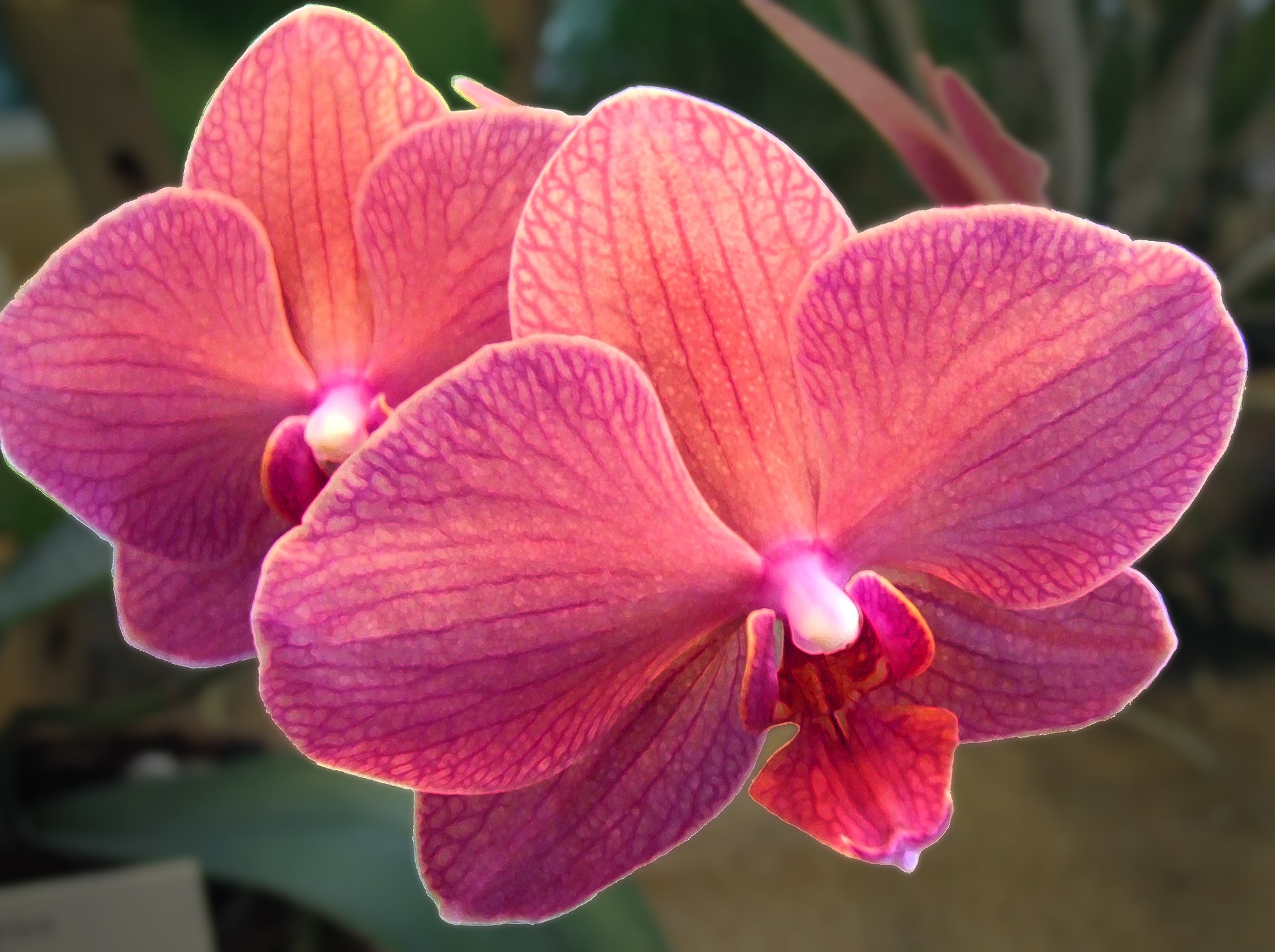 orchid-1707074_1920