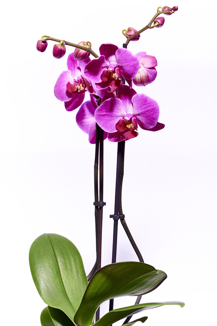 orchid-2521637_1280