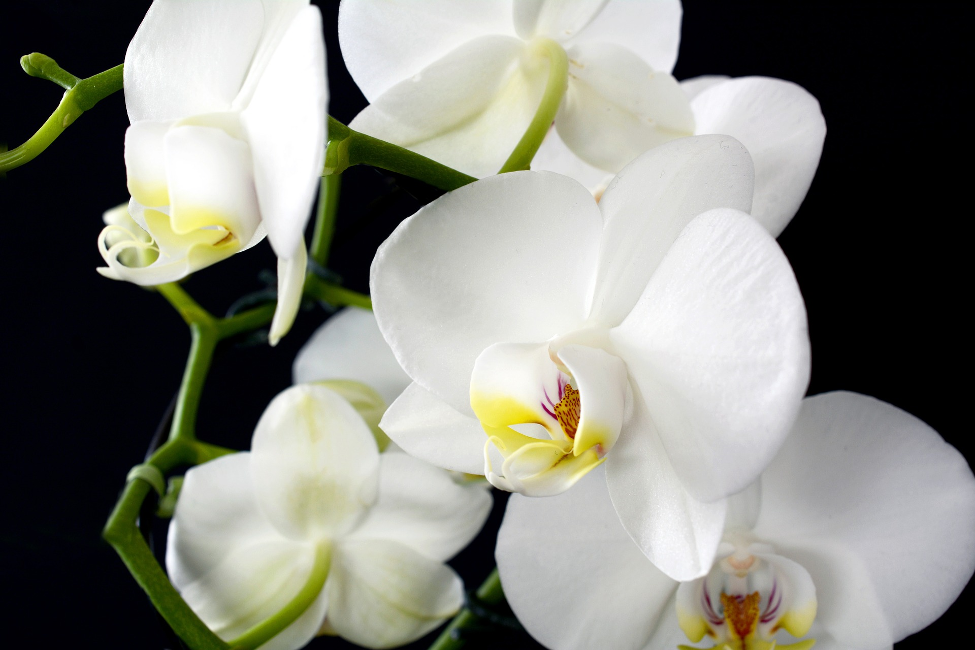orchid-3097458_1920