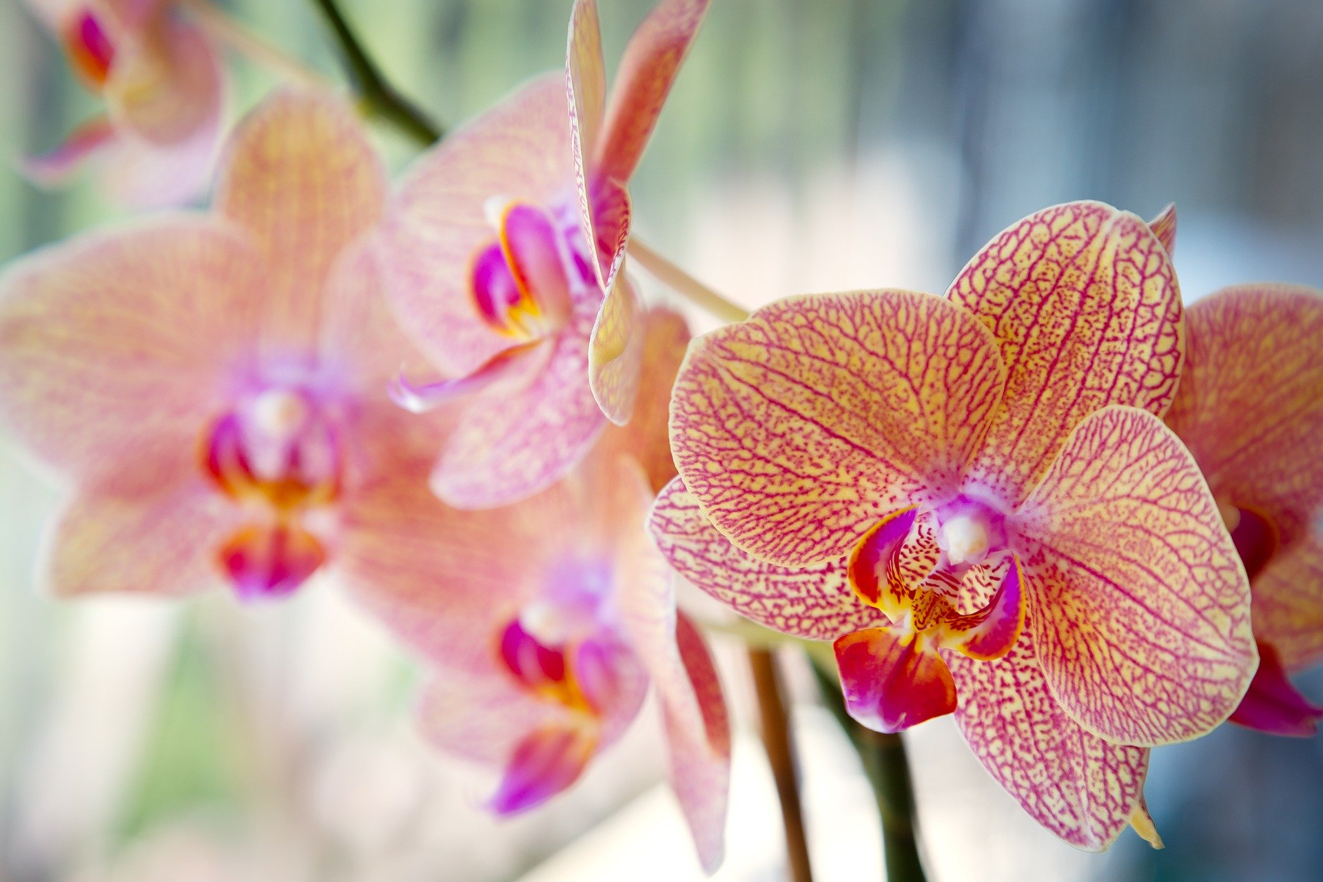 orchid-3536167_1920