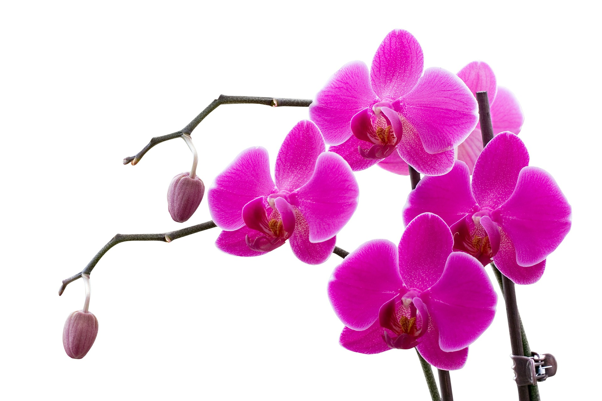 orchid-622481_1920