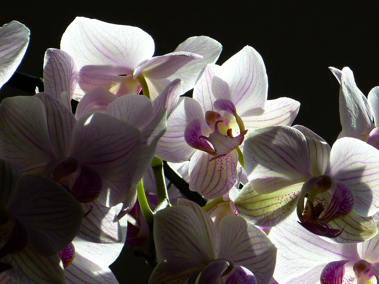 orchid-76105_1280