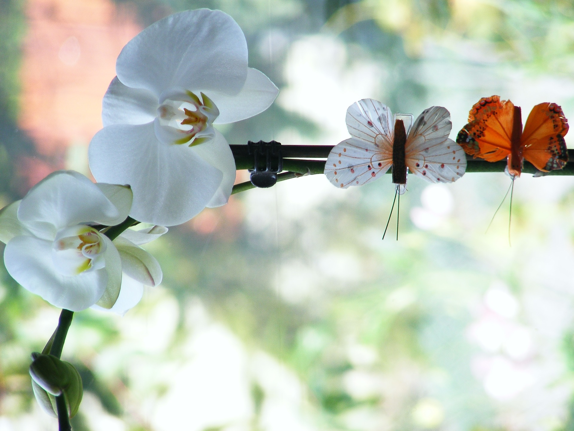 orchid-818065_1920