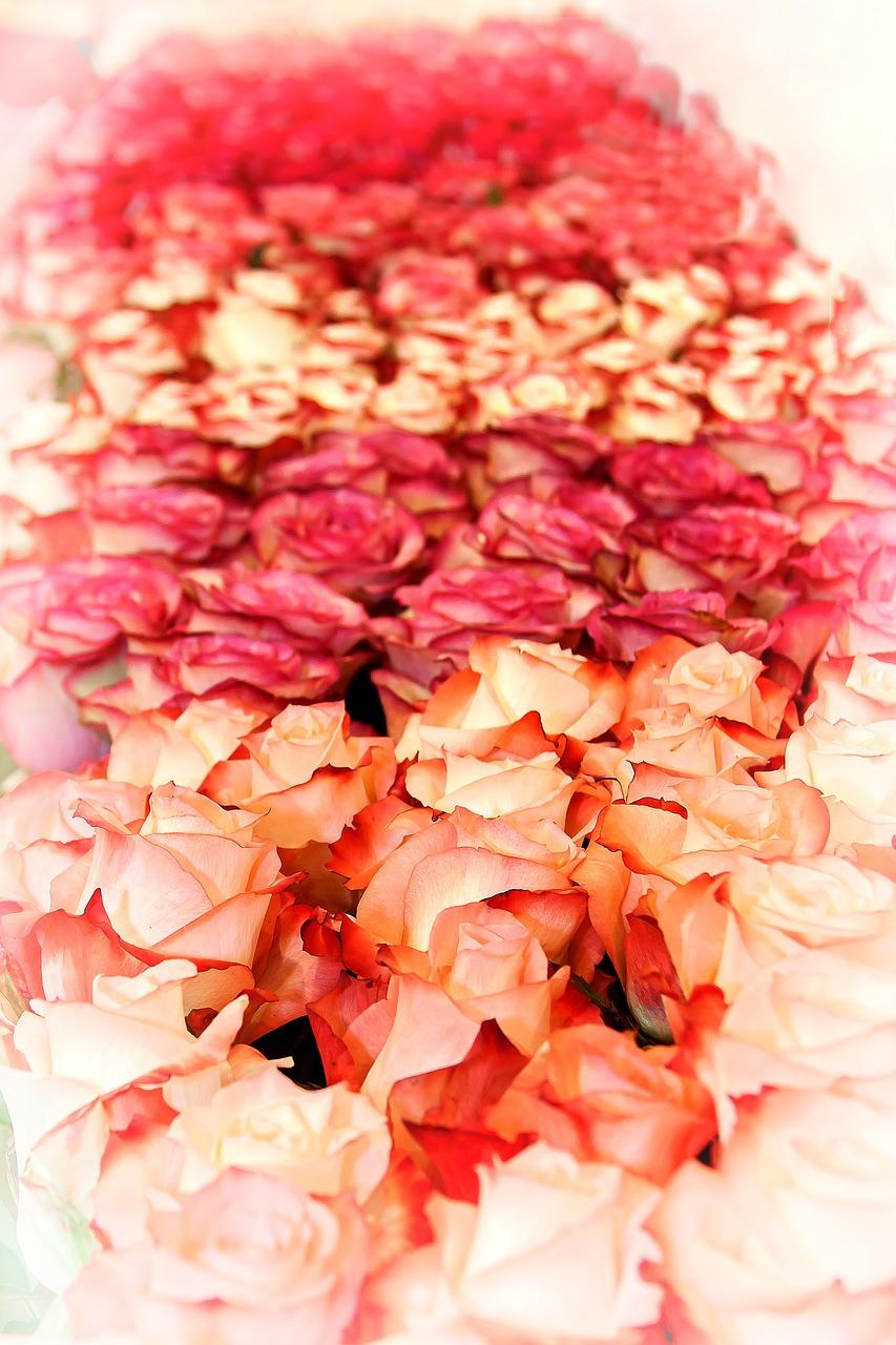 rose-1498661_1280