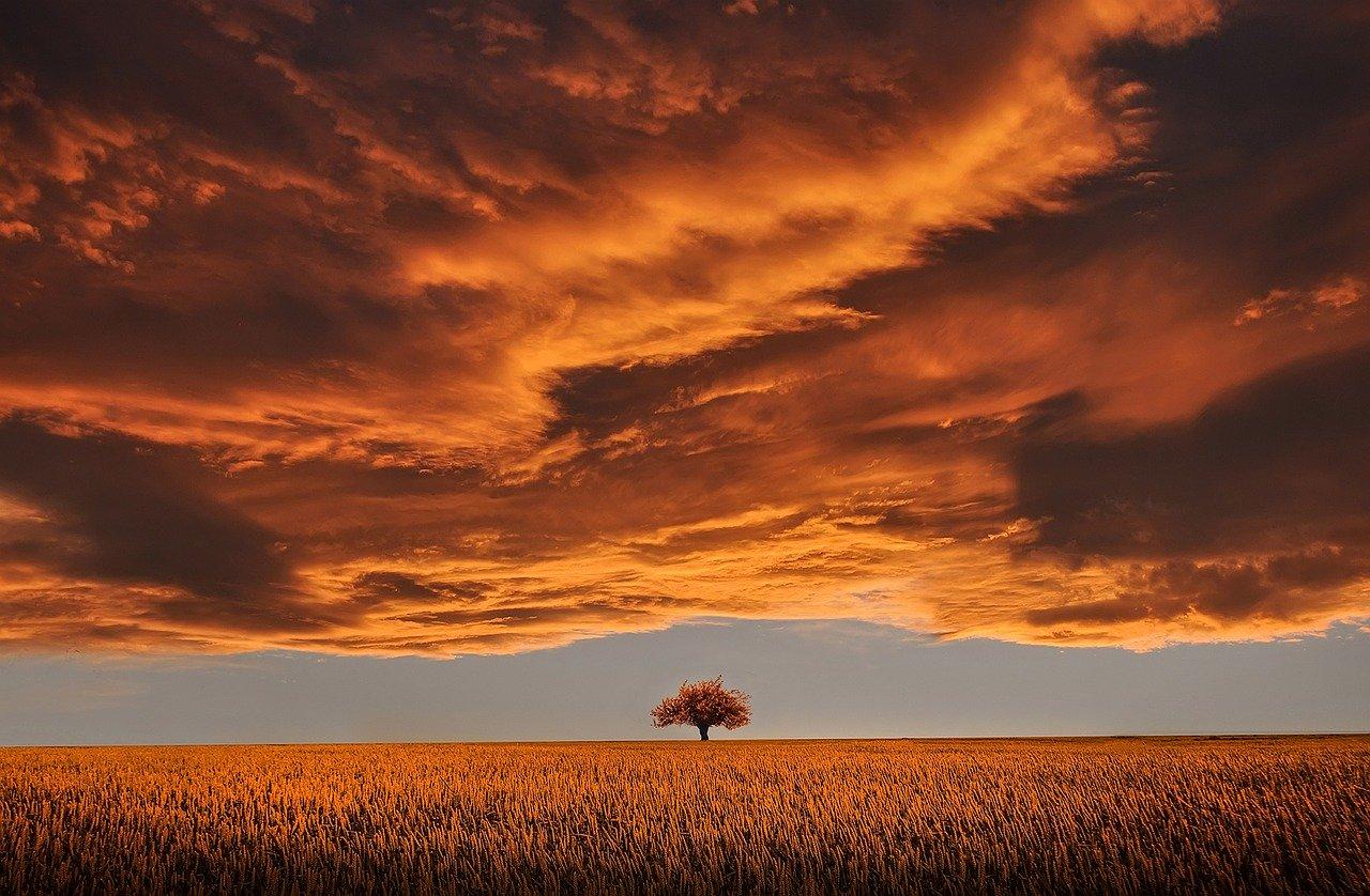 tree-736875_1280